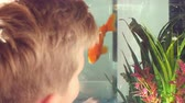рыба : Boy Looking At Pet Fish In Aquarium