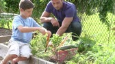 working parents : Father And Son Working On Allotment Together Stock Footage