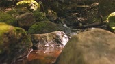 идиллический : Low angle view of stream running through forest