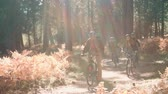 рюкзак : Four friends cycling past in a forest, backlit Стоковые видеозаписи