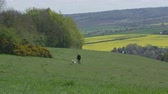 lifestyle shot : Mature Man Takes Dog For Walk In Countryside Shot On R3D Stock Footage