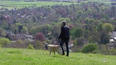 wide angle : Mature Man Takes Dog For Walk In Countryside Shot On R3D Stock Footage