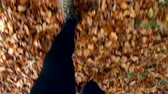 view point : Close Up Of Man Running Through Autumn Landscape Stock Footage