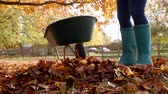 ancinho : Close Up Of Woman Raking Autumn Leaves Shot In Slow Motion