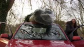 boşaltma : Couple Unloading Christmas Tree From Roof Of Car