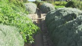 udržitelnost : Path Through Gardens With Produce Being Grown On Allotment