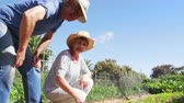 grown : Senior Couple Checking Plants Growing On Community Allotment