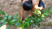 кхмерский : Cambodian man is planting with a small tree in the village surrounded by jungle during day. 12 december 2017 Koh Rong Island, Cambodia. Стоковые видеозаписи
