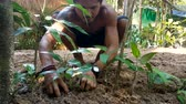 kamboçyalı : Cambodian man is planting with a small tree in the village surrounded by jungle during day. 12 december 2017 Koh Rong Island, Cambodia. Stok Video