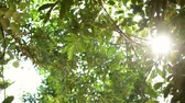 isqueiro : Crowns of trees with bright afternoon sun and rays. Tropical forests in Cambodia, Asia.