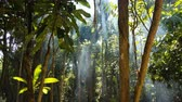 rámec : Rays of light passing through the tropical smoke of the Cambodian Jungle.