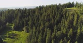 Flying over the beautiful forest trees. Landscape panorama.