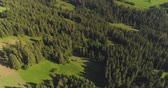 borovice : Flying over the beautiful forest trees. Landscape panorama.