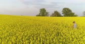 Farmer using Digital Tablet on Rapeseed Field