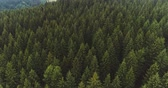 освещение : Flying over the beautiful forest trees. Landscape panorama.