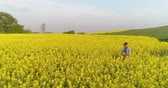 comprimidos : Farmer using Digital Tablet on Rapeseed Field