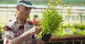 supervising : Researcher Examining Potted Plant At Greenhouse Stock Footage
