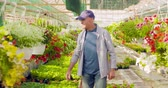 giardiniere : Confident male gardener examining potted flower plant Filmati Stock