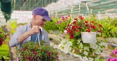 greenhouse : Confident male gardener examining potted flower plant Stock Footage