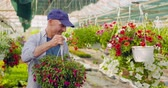 kreş : Confident male gardener examining potted flower plant Stok Video