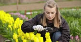 защита : Female Researcher Walking While Examining Tulips At Field Стоковые видеозаписи