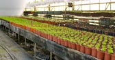 агрономия : Potted Plants On Table In Greenhouse