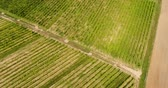 grape : Aerial View of Vineyard Vide Production