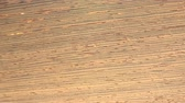 madeira de lei : (Perfect Loop) Wenge Wood This wenge wood has darker lines come from Brazil. Stock Footage