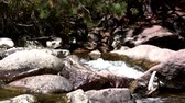 windy : Perfect Loop Boulder Mountain Creek . Capturing a fast flowing creek with rocky boulders from a side angle.