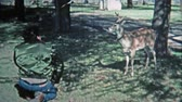 KEY WEST, FL -1971: Man playing with young pet whitetail male deer. Стоковые видеозаписи