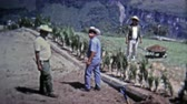 MEXICO CITY -1973: Farm hand workers tending to high elevation terraced fields. Стоковые видеозаписи