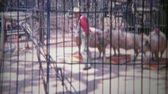 1963: Incredible pig circus show behind barbaric iron cage bars. Стоковые видеозаписи