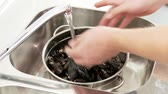 molusco : Mussels being placed in a sieve and washed under running water