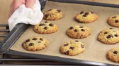 mão : Freshly baked chocolate chip cookies