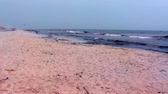 çirkin : Wide shot of polluted beach