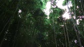 тонкий : Low-angle shot of tall green tropical trees reaching to the bright sky in Hawaii.