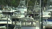relaks : A shot panning right of boats in a marina in Miami. Wideo