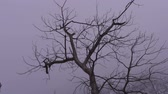 ladrão : Low-angle footage of the bare branches of a tree