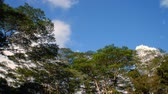 nebe : Green tree tops move in wind as clouds rush by overhead against blue sky in time lapse motion.