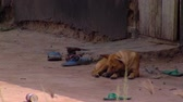 bouda : Wide shot of dog sleeping by pourch