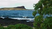 breaking : Hawaiian shoreline with volcanic rock and tropical tree in foreground with island and cliff in background.