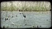 vinç : Tall crane carefully walks along marsh river water with willows and grasses surrounding the moving water. Vintage stylized video clip. Stok Video