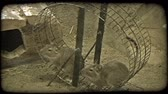 rotina : Two brown mice run together on circular spinning wheel for exercise in a cage in a zoo. Vintage stylized video clip.