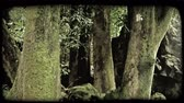 гавайский : Tilt up from ground of green mossy tree trunks and hanging leaves in green tropical forest on Hawaiian Island. Vintage stylized video clip.