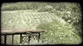 europa : Shot of an orchard in Italy through some trees. Vintage stylized video clip.