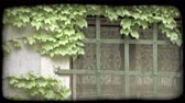 pencereler : Shot of a window with vines growing over it in Italy. Vintage stylized video clip. Stok Video