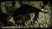 borovice : Still shot of old log cabin out of focus in background with background trees also out of focus with leafy branchplants in focus in foreground. Vintage stylized video clip.