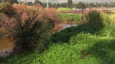 pár : A bend in the flow of the reddish brown River Jordan in the Galilee of Israel. The banks of the river are packed with green trees and shrubs. There is a road in the far right background with a few cars passing by. Dostupné videozáznamy