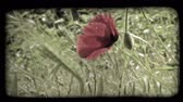 europa : A shot of a red flower in Italy. Vintage stylized video clip.