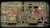 patio : A shot of chairs, tables and flowers on the patio of an Italian cafe. Vintage stylized video clip. Stock Footage